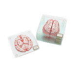 Brain Specimen Coasters - Packshot 1