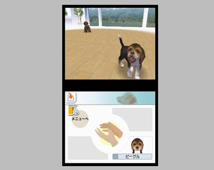 Nintendogs: Chihuahua and Friends - Screenshot 7