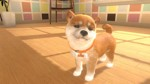 Little Friends: Dogs & Cats - Screenshot 4